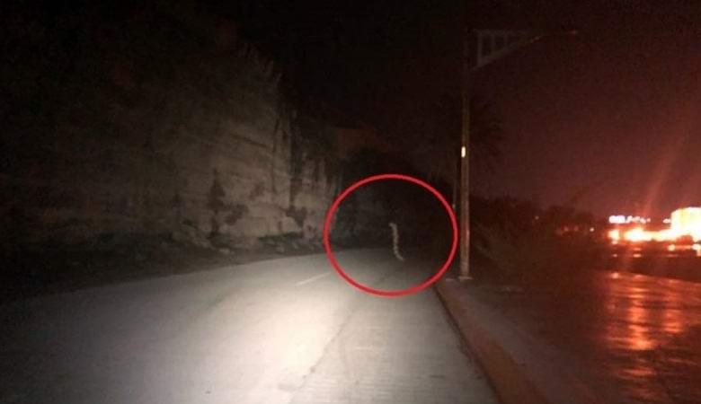 Гигантский червь переходил ночную дорогу в Мексике