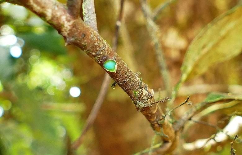 Удивительное дерево, источающее металл