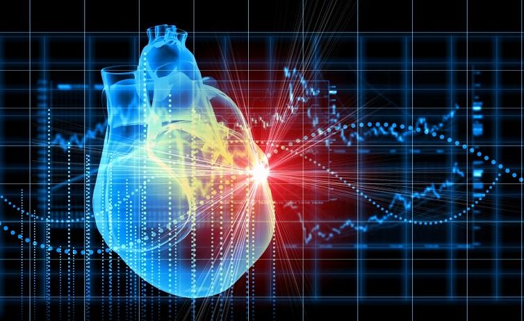 Найден способ восстановления сердца после инфаркта