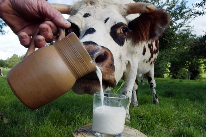 Использование молока стало главной причиной миграции древних людей