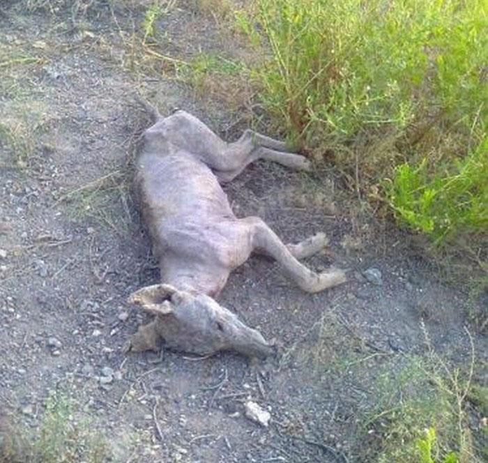В Киргизии сумели убить Чупакабру? (4 фото)