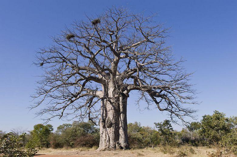 Деревья могут лечить в знак благодарности (6 фото + видео)