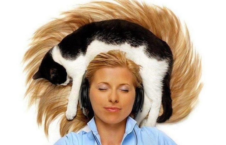 Видео котенка с человеческой головой вызвало широкий резонанс в Интернете