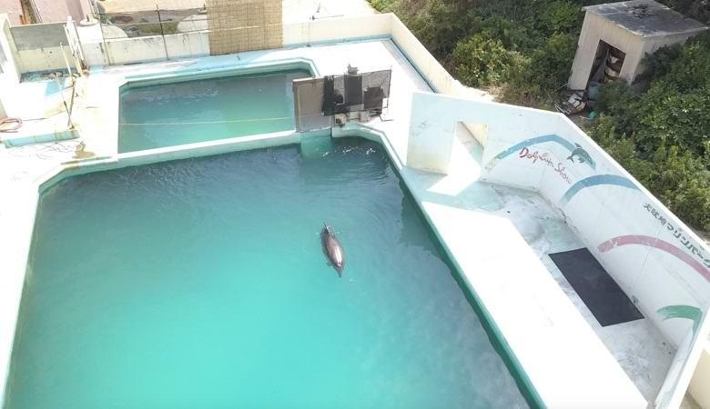 Дельфин, пингвины и другие животные месяцами выживают в заброшенном аквариуме