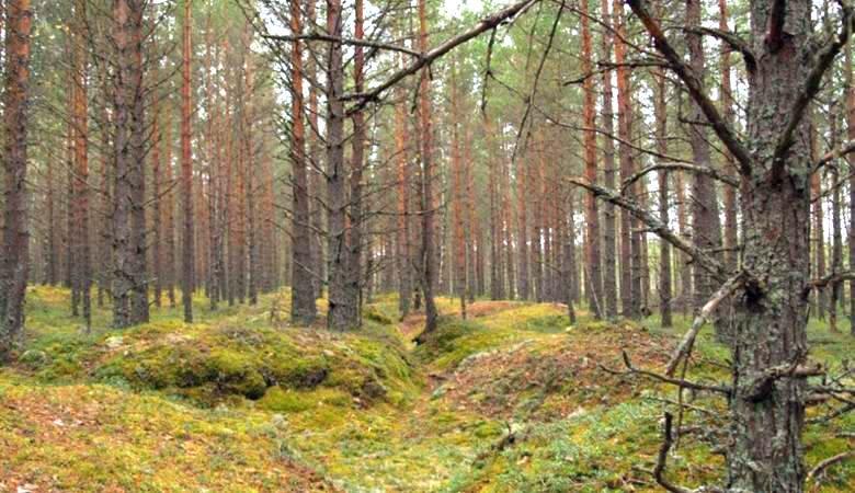 Аномальное место посреди леса повстречали грибники в Самарской области