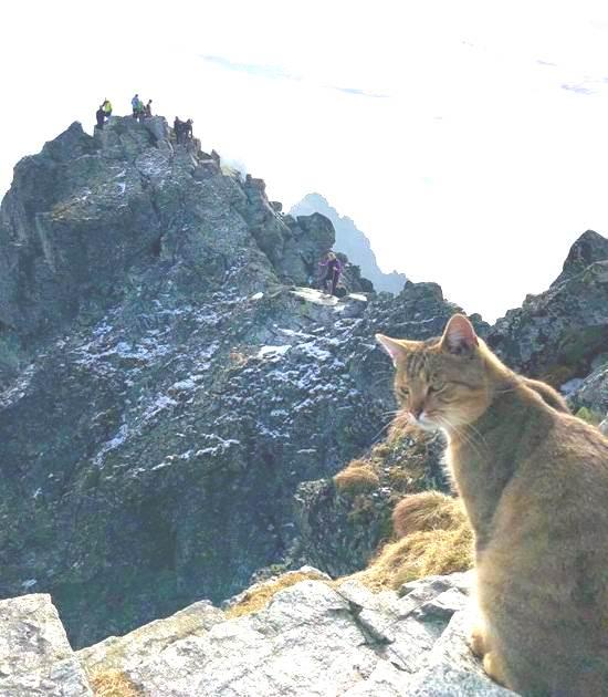 Поляк с трудом забрался на самую высокую гору страны и… встретил там неожиданного незнакомца