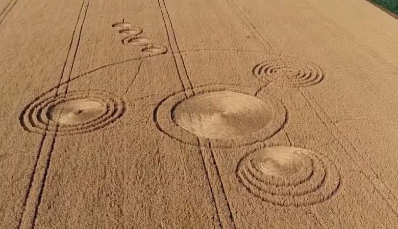 В Краснодарском крае неожиданно зацвели загадочные круги на поле