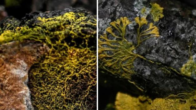 Ученые обнаружили загадочное самовосстанавливающееся существо