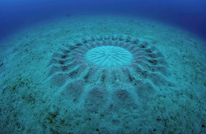 Кто оставляет загадочные круги на дне океана?
