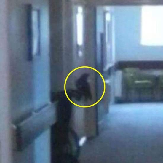 Женщина уверяет, что сфотографировала саму смерть (3 фото)