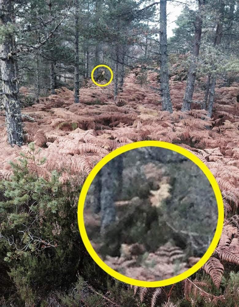 Шотландка сфотографировала Смерть в лесу