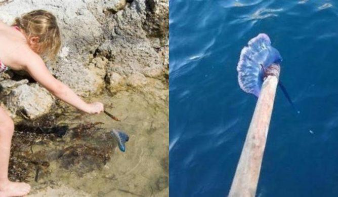 Найденный на пляже «красивый пакет» чуть не убил девочку. Отец подоспел вовремя