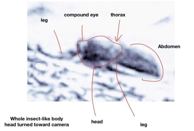 На фотографиях поверхности Марса обнаружили насекомых