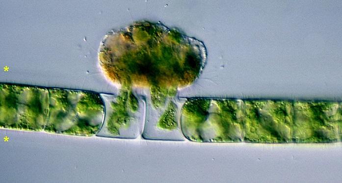 Учёные нашли доисторических микробов-вампиров