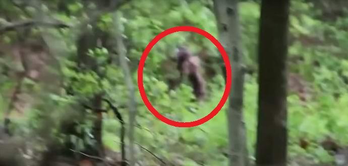 Самка йети с детенышем попала в объектив камеры ученого