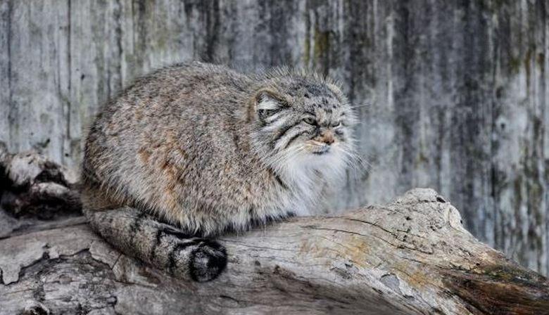 Старушка, приютившая маленького котенка, приобрела преданного друга и защитника