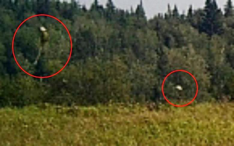 Охотничья камера в Канаде запечатлела странных существ