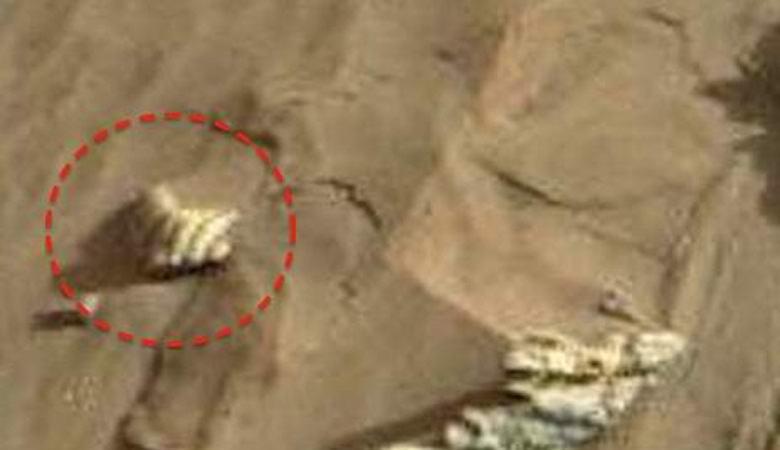 На Марсе найдены гигантские раковины