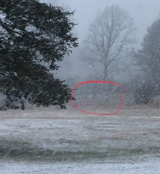 Американец сфотографировал снежных призраков