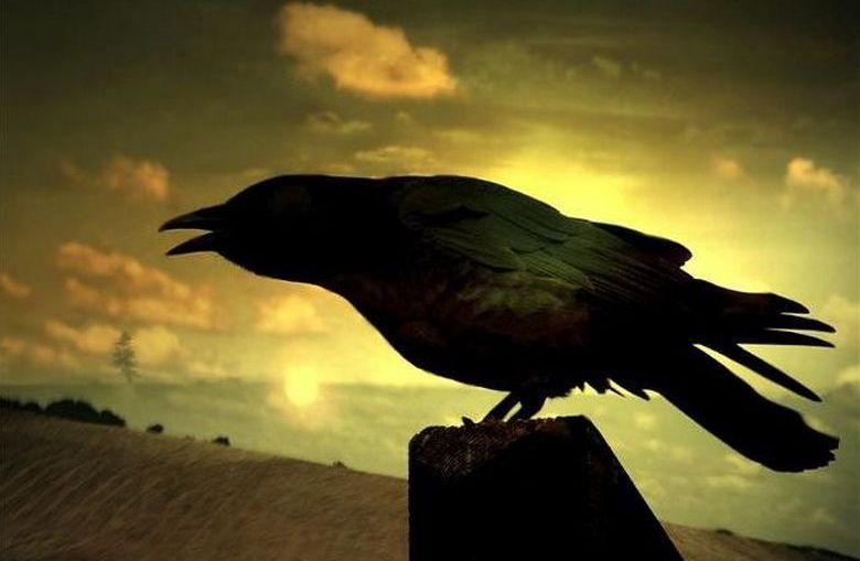 Загадочные животные и птицы - предвестники смерти