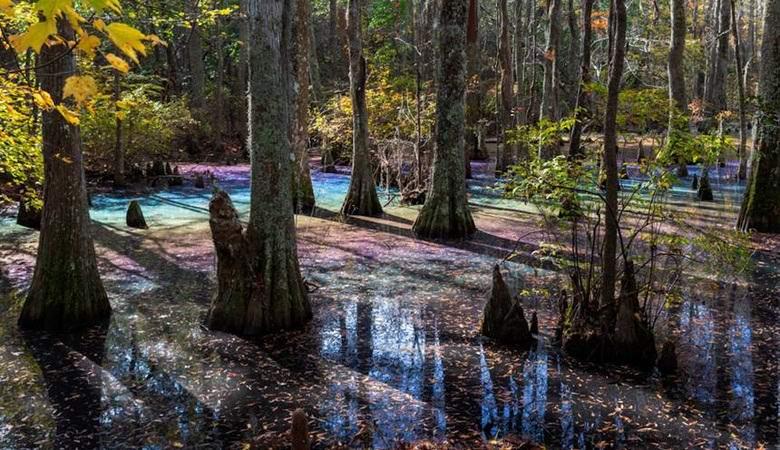 Удивительное радужное болото обнаружили в Виргинии