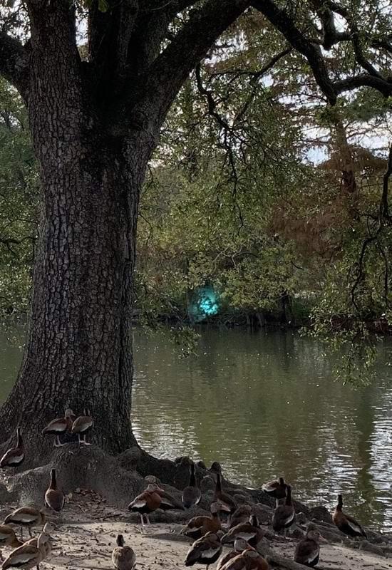 Загадочное свечение запечатлели в парке Нового Орлеана