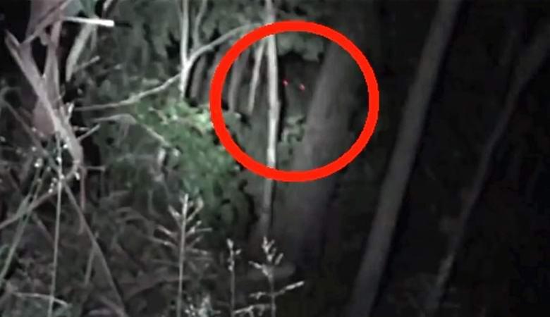 Существо со светящимися красными глазами сняли в ночном лесу