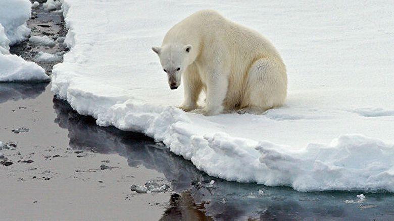 """Глобальное потепление больше опасно для истинных ученых, чем для белых медведей"""" /></p> <p>» width=»800″>Фото из открытых источников</p> <p>В Сети интернет масса материалов, в том числе и видео (смотрите одно из них ниже), рассказывающих о том, как от глобального потепления страдают в Арктике белые медведи, как резко сокращается их численность, и что, скорее всего, этот вид животных вскоре вообще исчезнет с лица нашей планеты. Но так ли это?<br /> Совсем иного мнения об этом профессор-зоолог Университета Виктории (Канада) Сьюзен Крокфорд. За 15 лет изучения жизни белых медведей ученая кропотливо и настойчиво доказывала, что проблема с этими животными высосана из пальца для подтверждения мифического глобального потепления и его апокалиптических последствий.</p> <p>Чего стоит фундаментальный труд Сьюзен Крокфорд  «Катастрофа, которой никогда не было», где она приводит массу доказательств обратного, например, что Международная Красная книга дает совсем иные сведения, согласно которым, на сегодня популяция белых медведей составляет не менее 30 тысяч особей, хотя сторонники глобального потепления трубят в прессе, в интернете об оставшихся нескольких тысячах, а то и сотнях этих животных. А научный блог зоолога «Белый медведь» — лучшая демонстрация несоответствие того, что есть на самом деле, и что нам вдалбливают в головы в угоду придуманного глобального изменения климата, на устранение последствий которого в мире тратятся десятки миллиардов долларов – и они уходят неизвестно куда.</p> <p>Впрочем, можно догадываться куда, особенно после того, как профессор Сьюзен Крокфорд после 15 лет безупречной работы была уволена из Университета Виктории. Вице-президент учебного заведения Мишель Паркин даже не скрывает, что это увольнение связано с ее исследованием жизни белых медведей, которое опровергает мировую доктрину о серьезных последствиях изменения климата на Земле. Парадокс, не правда ли?</p> <p>Мы уже не раз писали, что глобальное потепление было придумано для выкачивания на"""
