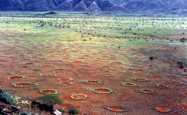 Мифические кольца грибов: что это такое